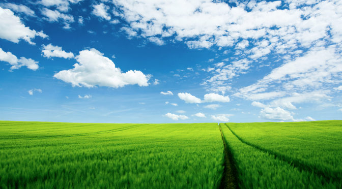 Blue-Sky-over-Green-Field-with-Tractor-Marks